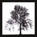 Bild Baum Vorderansicht