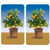 Herdabdeckplatten-Set Orangenbaum, 2-tlg., bruchfest Vorderansicht