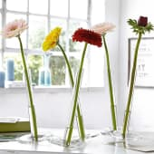 "Mini-Vasen-Set ""Balance"", 10-tlg., Glas Katalogbild"