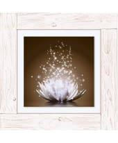 Bild Magie der Lotus-Blume Vorderansicht