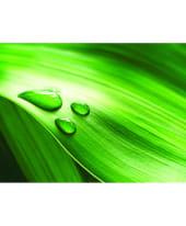"""Glasbild """"Dew on leaf"""", 80x60 cm Vorderansicht"""