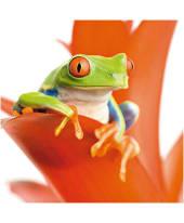 """Bild """"Frog on his throne"""" Vorderansicht"""