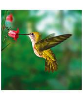"""Bild """"Hummingbird"""" Vorderansicht"""