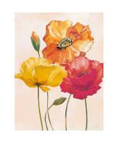 """Bild """"colourful poppies"""" Vorderansicht"""