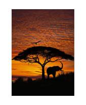 """Fototapete """"African Sunset"""", 194x270 cm Vorderansicht"""