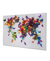 Bild Butterfly World Vorderansicht