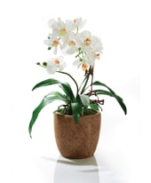 Kunstpflanze Orchidee Rusty, Kunststoff/ Keramik, ca. H40 cm Vorderansicht