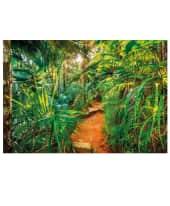 Fototapete Dschungel Vorderansicht