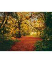 """Fototapete """"Autumn Forest"""", 388x270 cm Vorderansicht"""