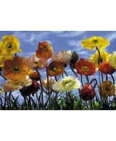 """Fototapete """"Poppy"""", 368x254 cm Vorderansicht"""