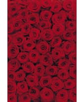 Fototapete Roses 270x194 cm Vorderansicht