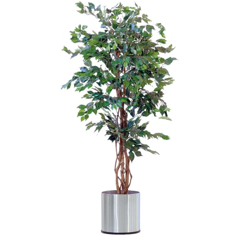 Kunstpflanze Ficus Benjamini, Naturstamm, ca. H170 cm Vorderansicht