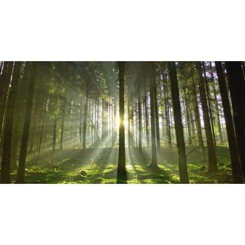 Bild Wald, Float-Glas, ca. L100xH50 cm Vorderansicht