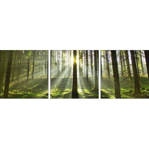 Bild Wald im Gegenlicht Vorderansicht