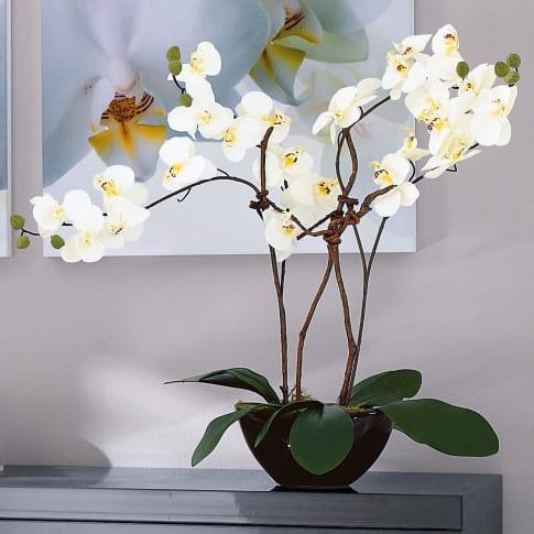 kunstpflanze orchideentopf modern kunststoff keramik ca h70 cm. Black Bedroom Furniture Sets. Home Design Ideas