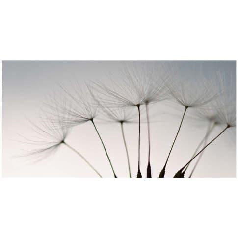 """Bild """"Dandelion seeds"""" Vorderansicht"""
