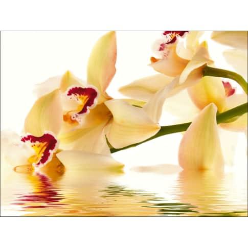 Bild Weiße Orchidee, Float-Glas Vorderansicht