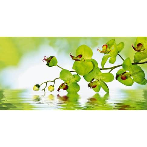 Bild Schöne Orchidee Vorderansicht