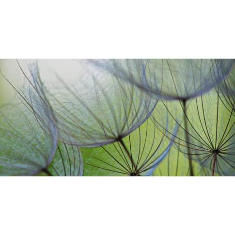 Bild Pusteblumen Samen Vorderansicht