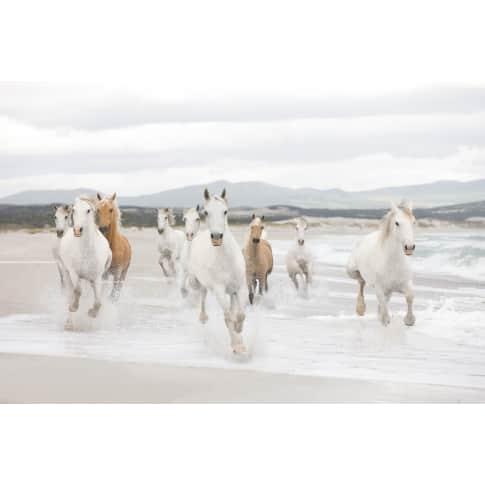 Fototapete Pferde in der Camargue, Papier, ca. B368xH254 cm Vorderansicht
