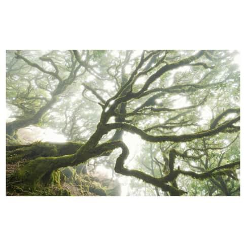 Digitaldruck Fototapete Vermooste Bäume Vorderansicht
