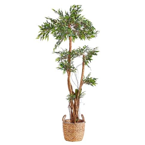 Kunstpflanze Tropischer Ruscus, Naturstamm, ca. H150 cm Vorderansicht