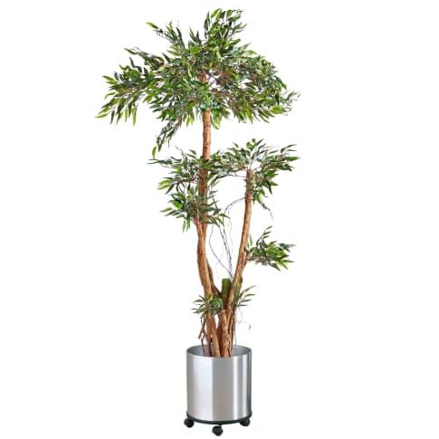 Kunstpflanze Tropischer Ruscus, Naturstamm, ca. H150 cm Inszeniertes Bild