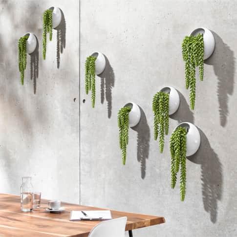 Wand-Objekt Kunstpflanze, Pflanztopf, modern, Kunststoff, Steingut Inszeniertes Bild