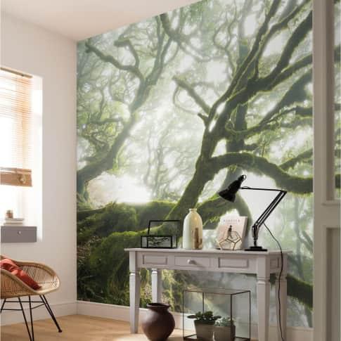 Digitaldruck Fototapete Vermooste Bäume Inszeniertes Bild