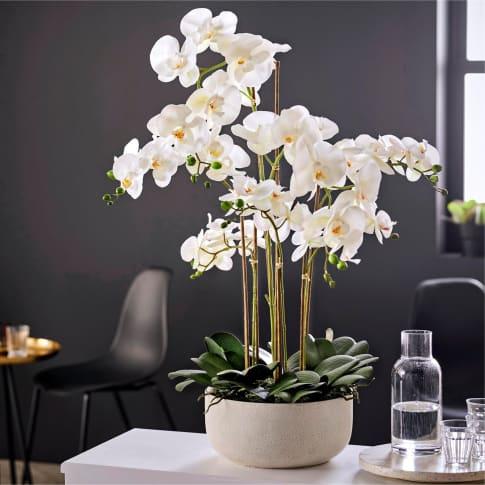 Kunstpflanze Orchideentopf Royal Inszeniertes Bild